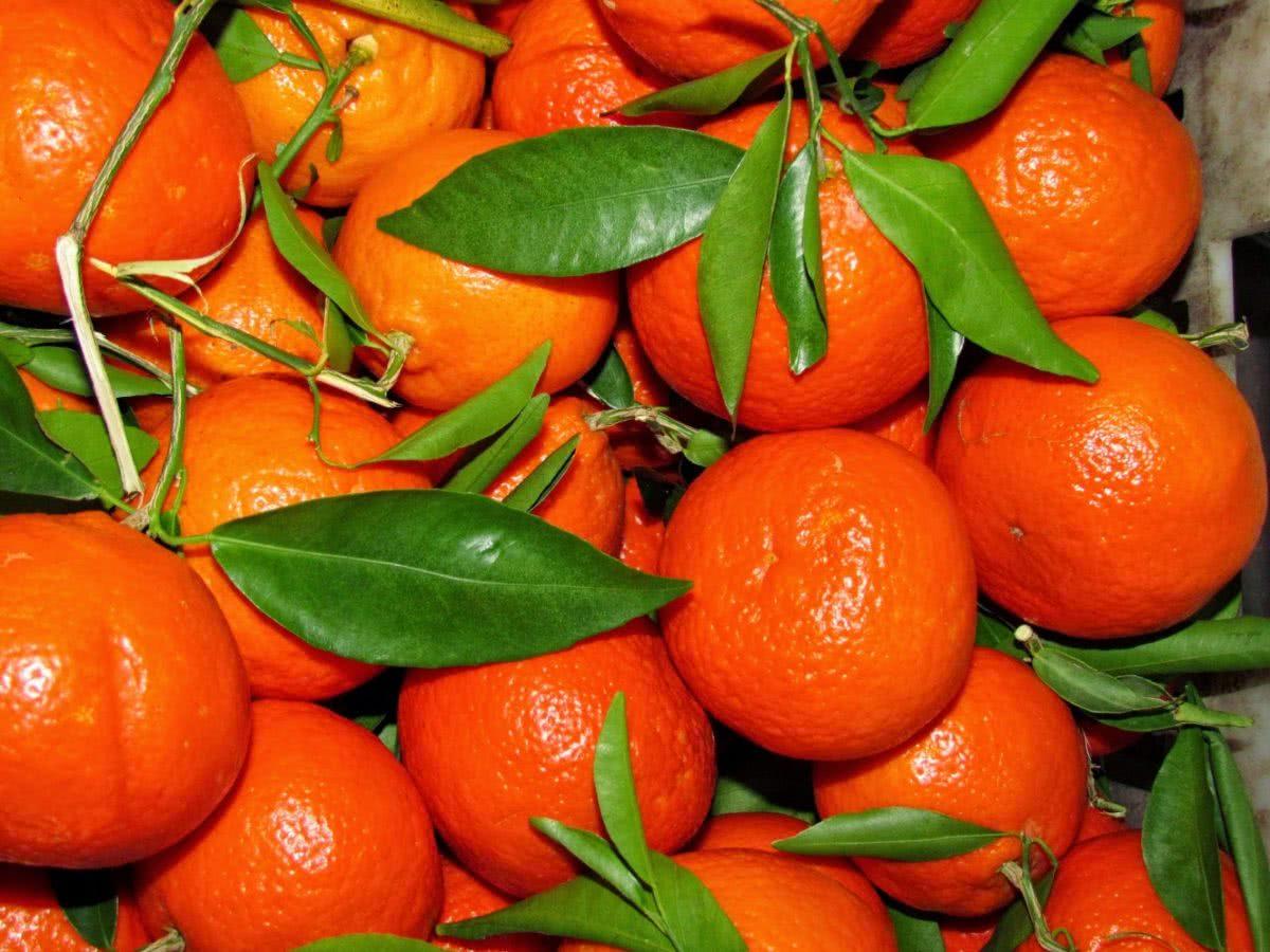 Рецепт приготовления мандаринового ликера