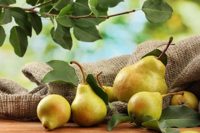 Рецепт приготовления самогона из груш