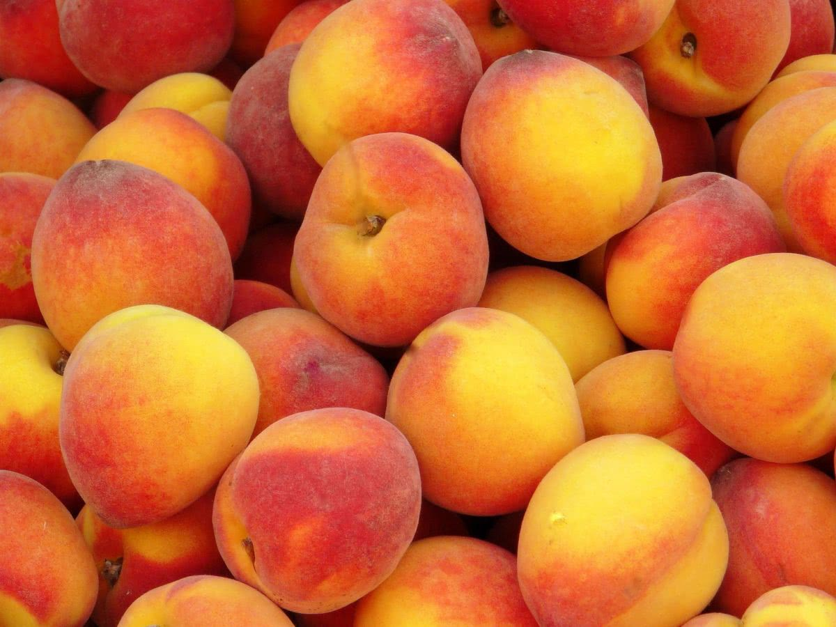 Рецепт приготовления домашнего вина из персиков