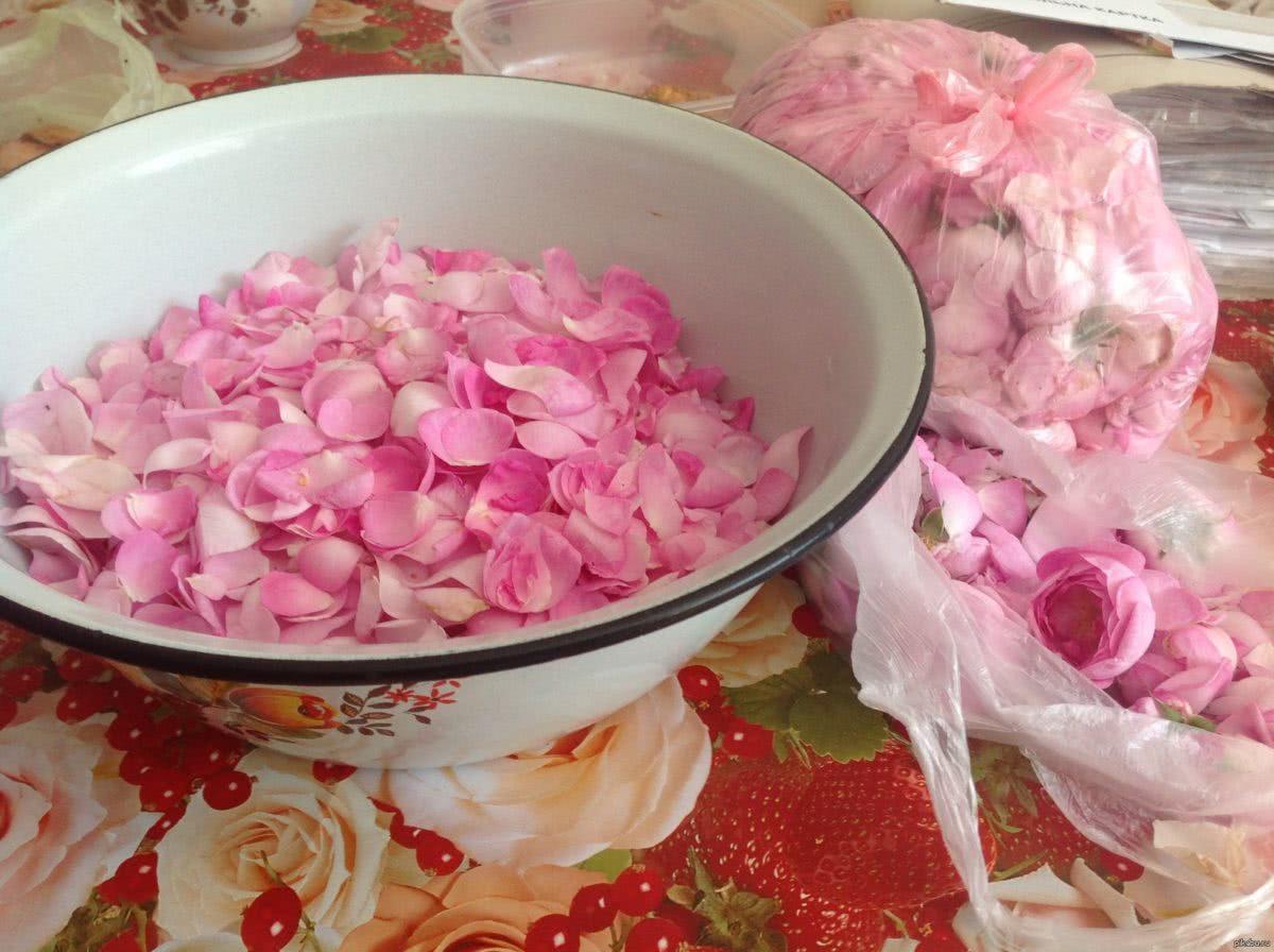 Рецепты наливок из чайной розы
