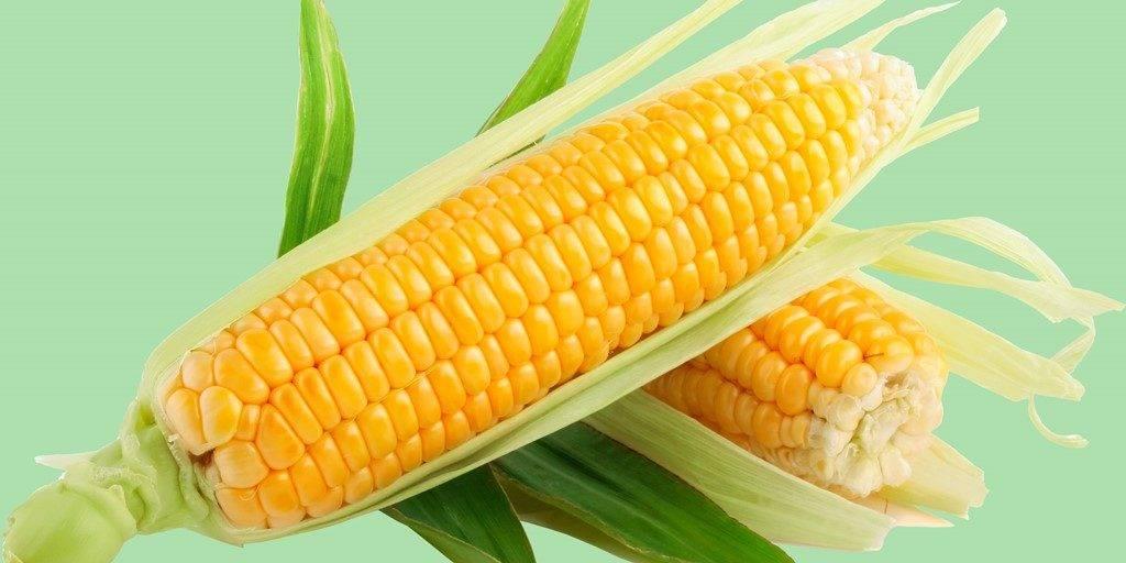 Рецепт приготовления домашнего пива из кукурузы