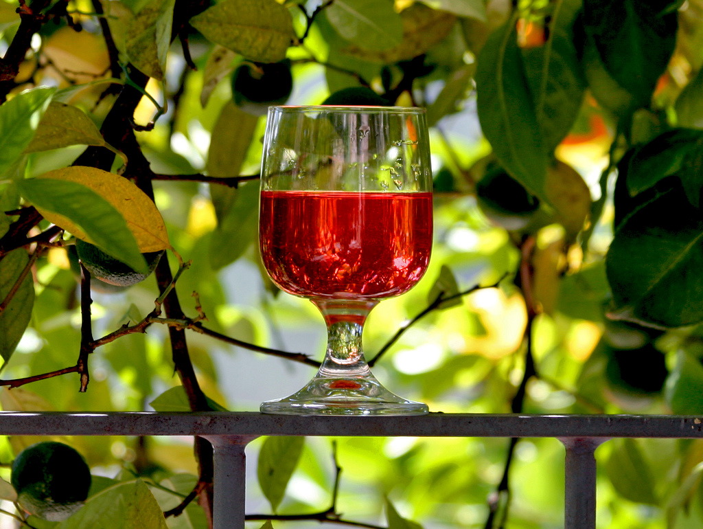 Как сделать вино из барбариса