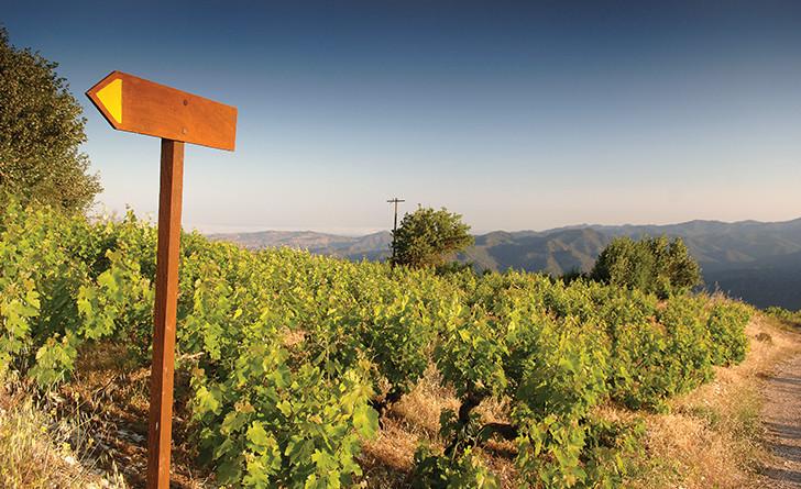 Вина Кипра: история виноделия, сорта винограда, марки, бренды и регионы