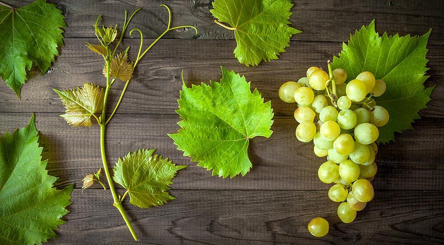 Рецепт приготовления домашней настойки из винограда на водке, самогоне и спирту