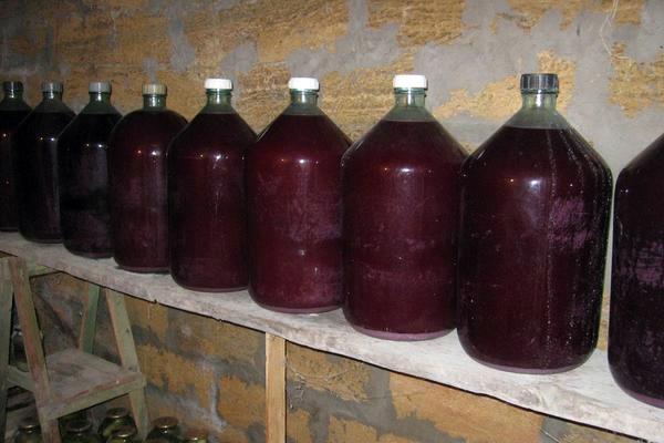 Приготовление вина из винограда Изабелла в домашних условиях